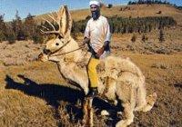 osama-jackalope-big