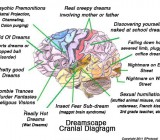 Dreamscape Cranial Diagram