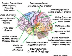 Dreamscape Cranial Diagram